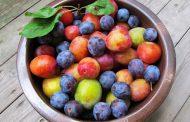 ۳ گیاه دارویی ضدپیری